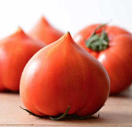 赤土育ちの高糖度ファーストトマト